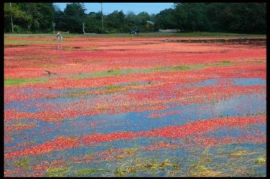 Cranberry Bog http://www.flickr.com/photos/kentjordan/249286182/