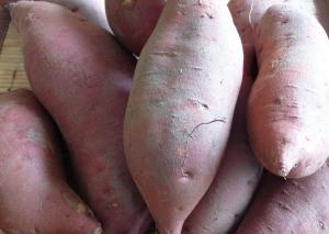 "Sweet Potatoes ""yams"" (c) jfhaugen"