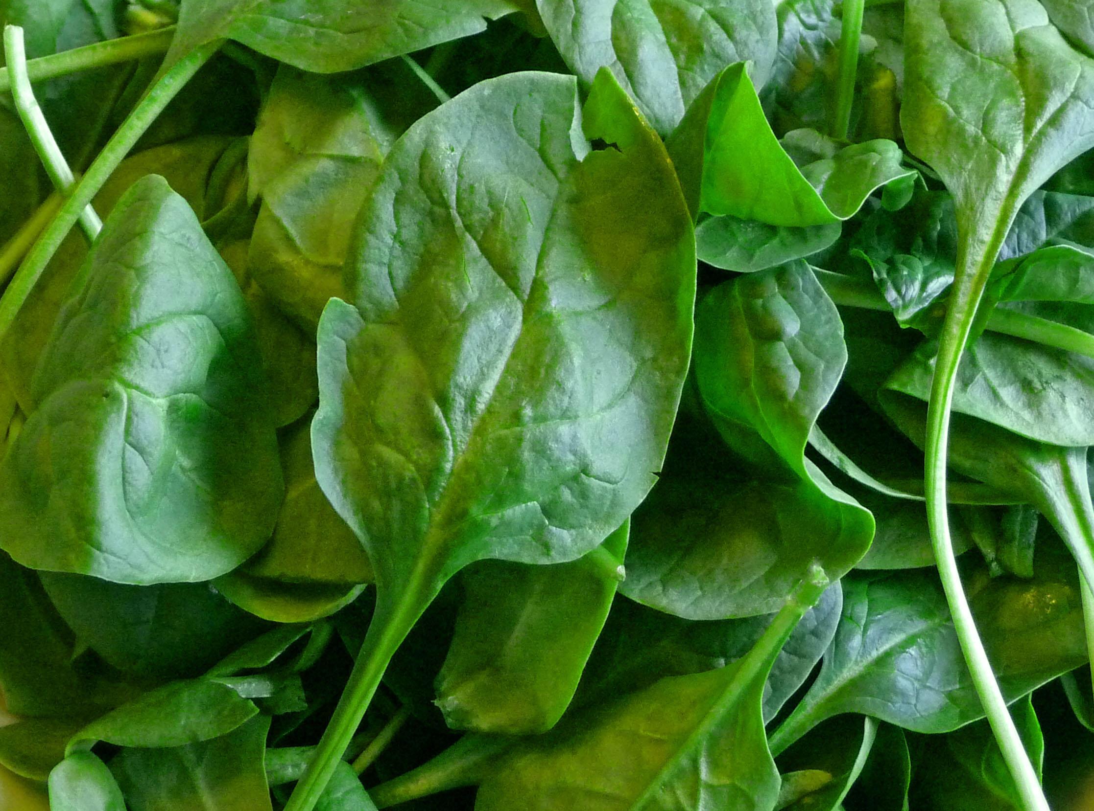Baby Spinach (c) jfhaugen